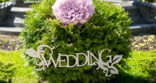 Wedding Planner vs. Do-it-yourself